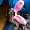 brio bunny