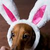 nano bunny