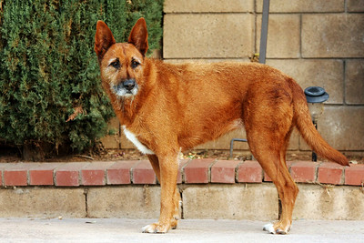Ginger - posing