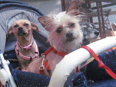 Janene's Doggie Friends 007