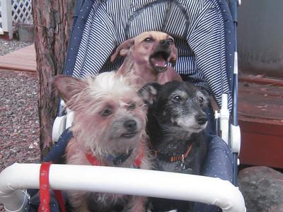 Janene's Doggie Friends 005