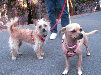 Janene's Doggie Friends 003