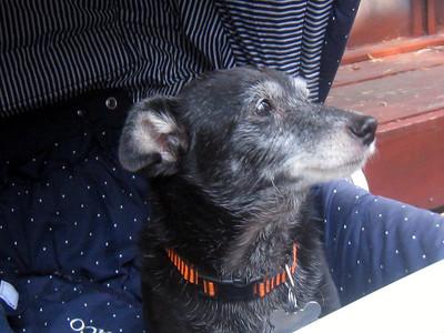 Janene's Doggie Friends 004