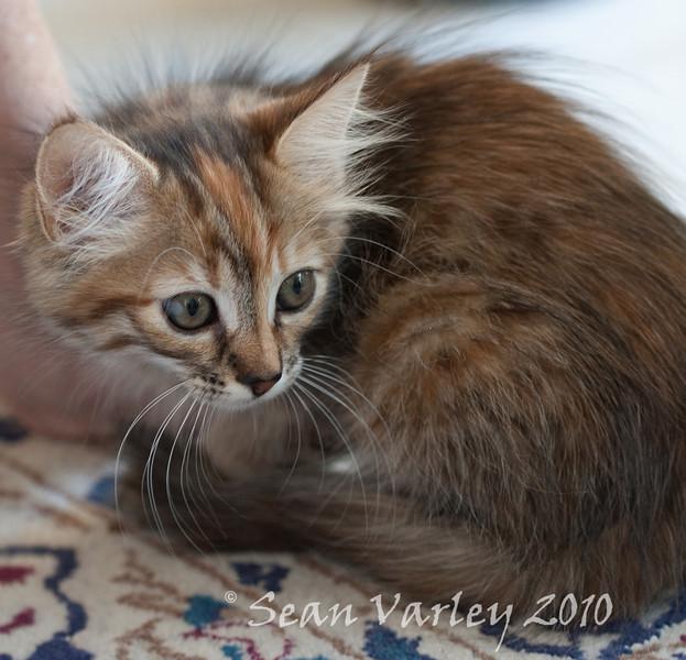 Kitten-5
