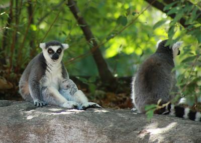 Philadelphia Zoo with Amy