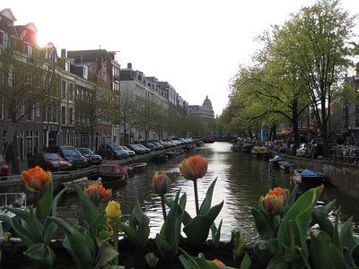 Tulips and canal