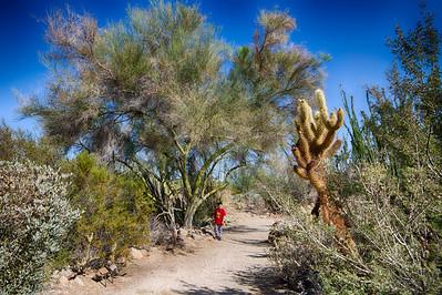 Phoenixx in the Desert