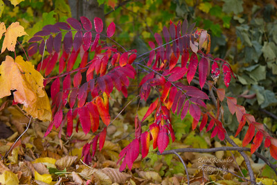 Fall 2012 Botanical Gardens #4