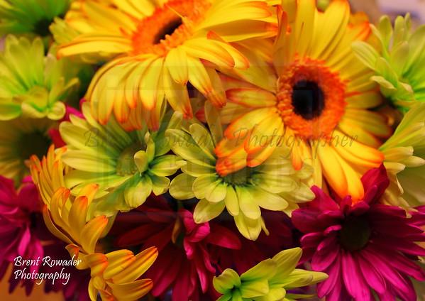 Flowers for Lynda 2s