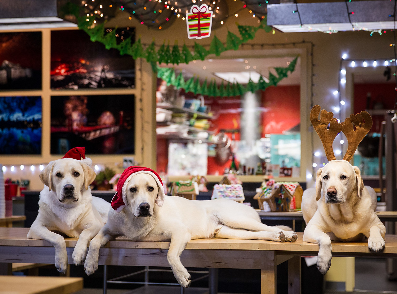 Bodi, Butters and Jedi Christmas doggies
