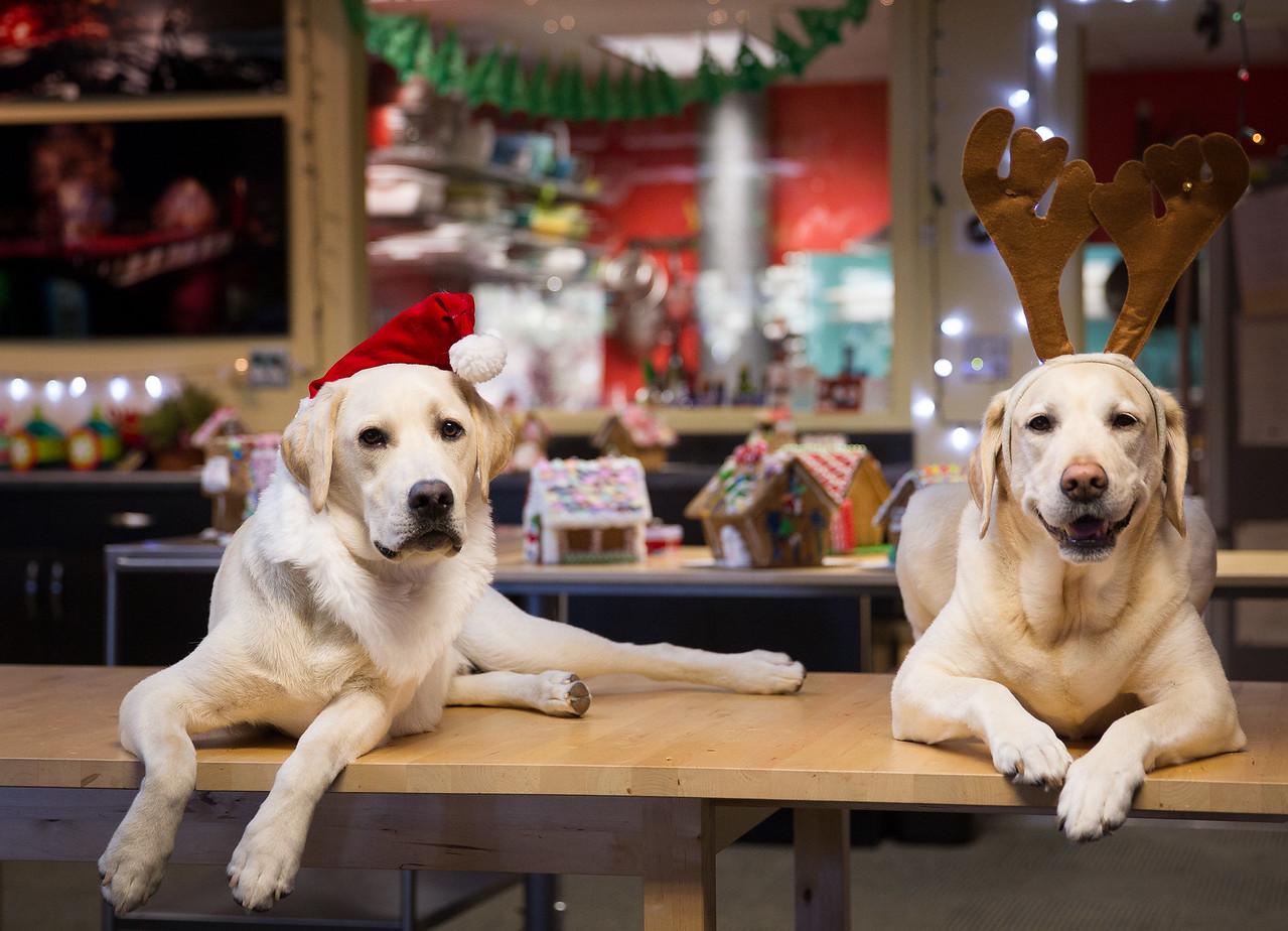 Bodi and Jedi Christmas doggies