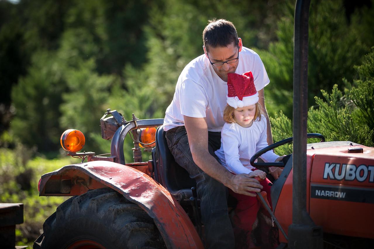 Christmas tree farm 2012