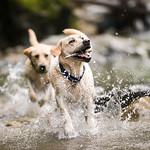 Chewie Bodi in creek running-2980