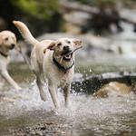 Chewie Bodi in creek-7333