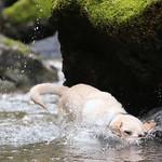 Chewie Bodi in creek running-2565