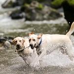 Chewie Bodi in creek running-2608