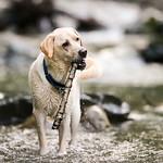 Chewie Bodi in creek running-7624