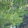 Swift Creek Aug 2011 004