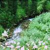 Swift Creek Aug 2011 001