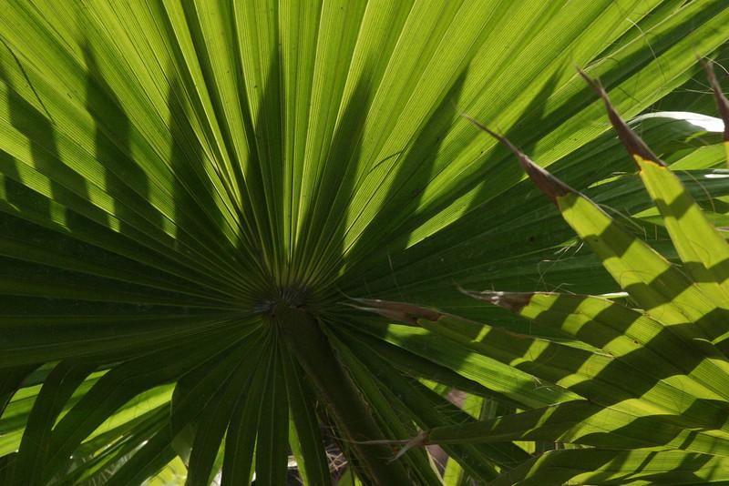 Fern Plants with shadows..  12/15/07