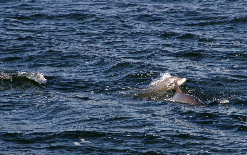 Dolphins at the Jetties 11/17/07,07