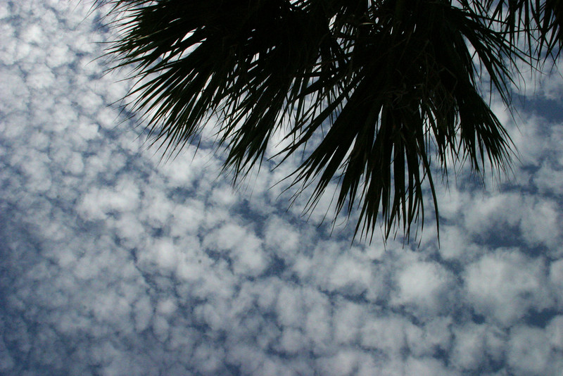 Cirrocumulus Clouds with Palms 12/15/07