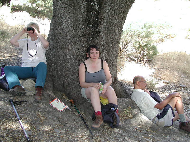 the last shade for miles - in the Alpujarras