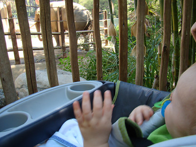 Pint Sized Adventure-LA Zoo and Gymboree