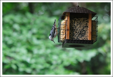 The bird feeder.  It was a popular place.