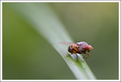 The yard is a wonderful place for macro photography.
