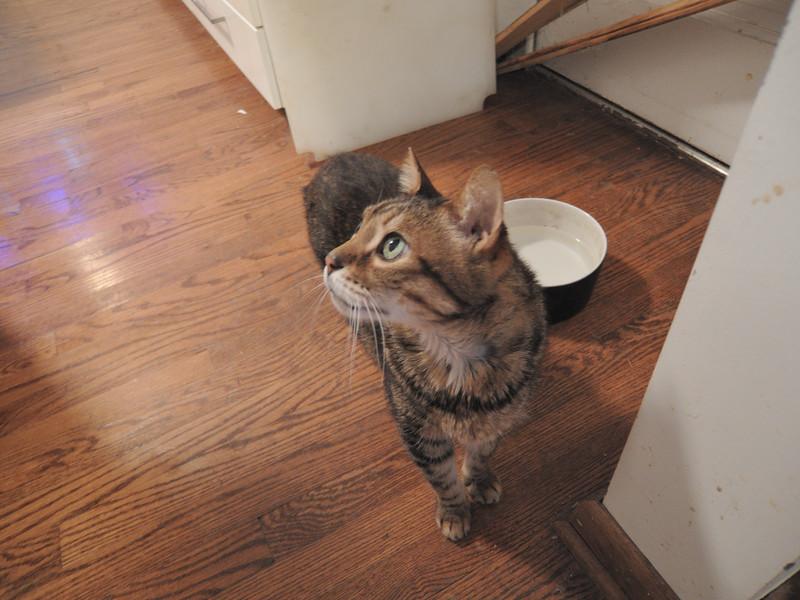 猫のオリバー Oliver, the cat