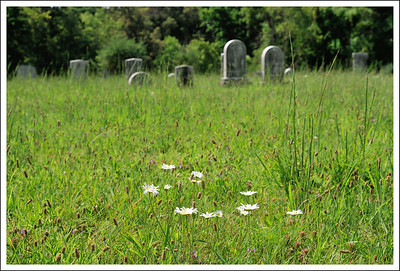 I love the wildflowers in this cemetery.