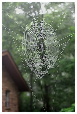A spider web found on the front lawn on a foggy morning.