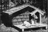 Jinx on doghouse porch