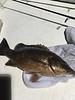 Greg's snapper. Mmmm good dinner Sunday night + three others (2 snapper, 1 triggerfish)