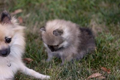 Pups 080611-0990