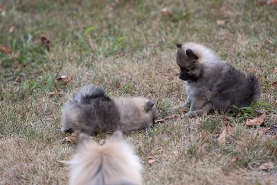 Pups 080611-0994