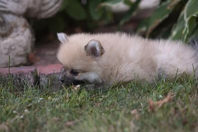 Pups 080611-0991