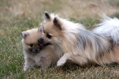 Pups 080611-1005