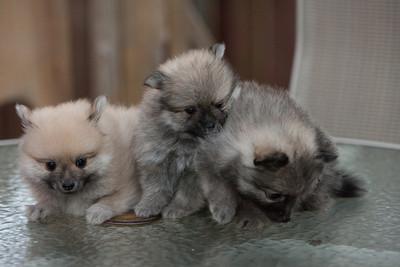 Pups 080611-1014