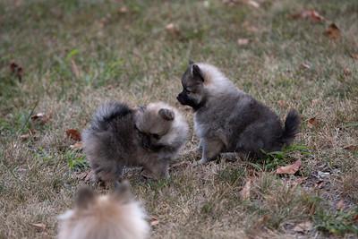 Pups 080611-0996