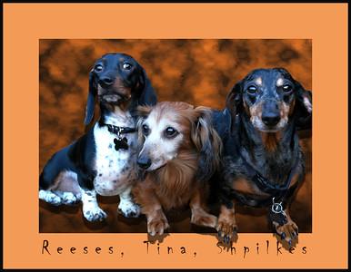 The 3 amigos v5