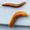 06-10-2012-Slugs-3289