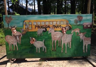 Prodigal Farms 2017