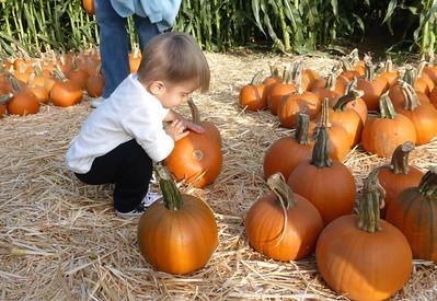 Pumpkin Farm 2014 Lopez 11