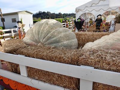 Pumpkin Farm 2014 Lopez 3