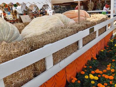 Pumpkin Farm 2014 Lopez 4