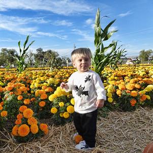 Pumpkin Farm 2014 Lopez 16
