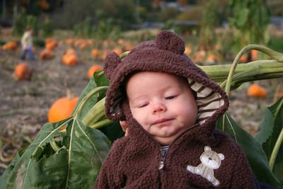 Pumpkin Patch 2008 042