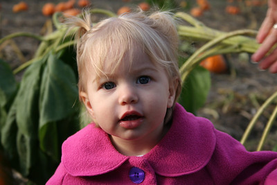 Pumpkin Patch 2008 015